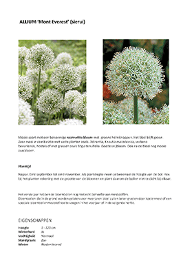 ALLIUM_Page_1-small