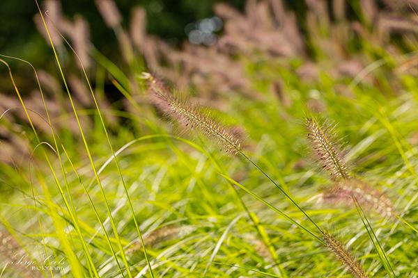 landelijke_tuin-11