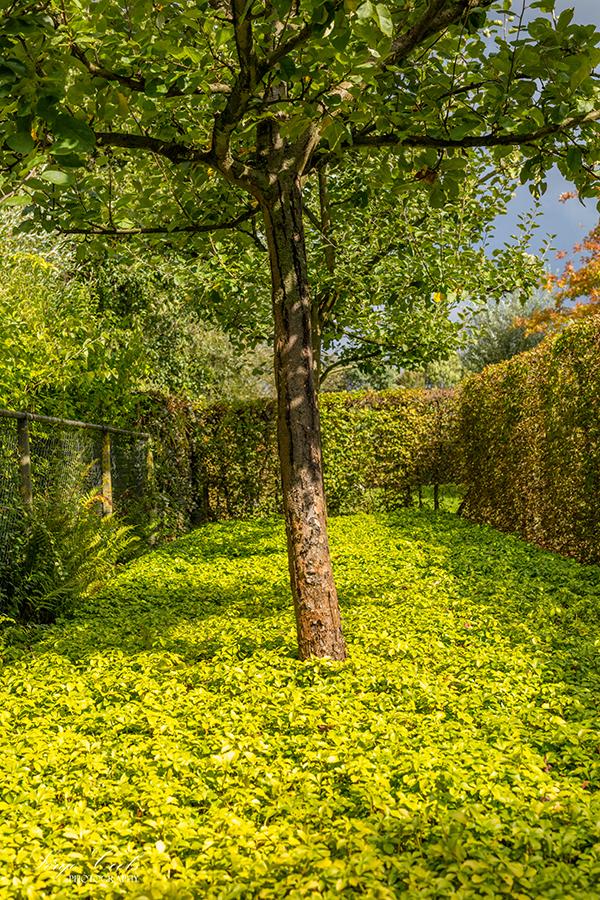 landelijke_tuin-17