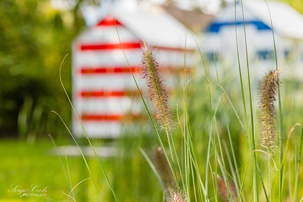 landelijke_tuin-9